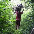 Brennholz aus dem Busch